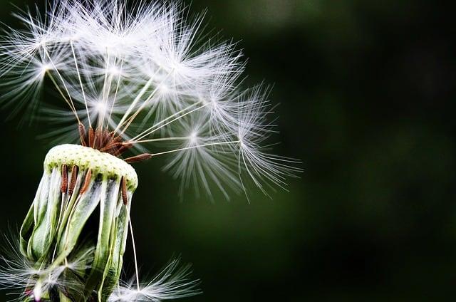 Síntomas de la alergia