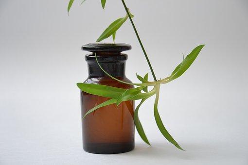 como conservar las plantas medicinales