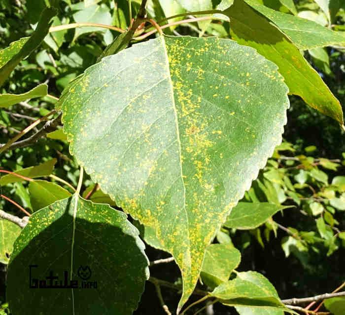 hojas de árboles y plantas medicinales