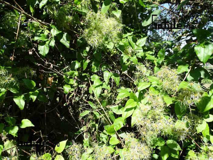 utilidades planta abrazadera