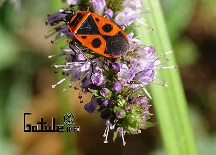 como conservar plantas medicinales
