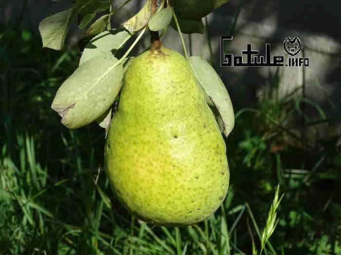 propiedades pera limonera