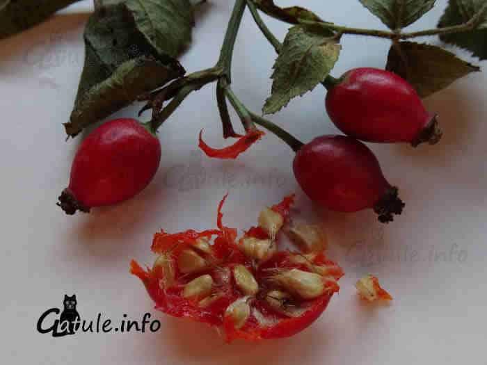 frutos rosa silvestre