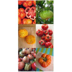 6 tipos de Solanum Lycopersicum