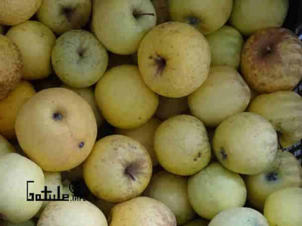 manzanas golden