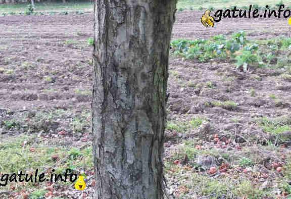 manzano el árbol cuidados cultivo
