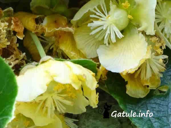 propiedades flores kiwi