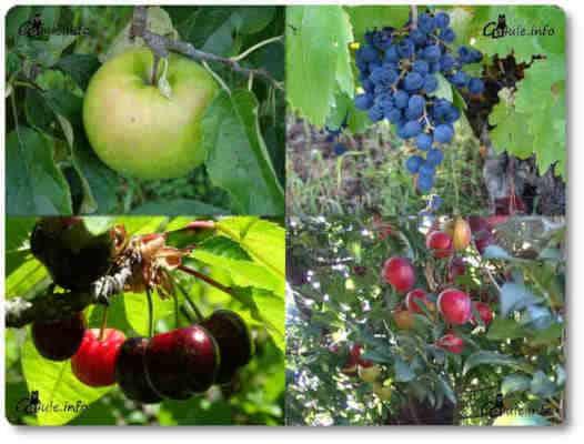 especies vegetales