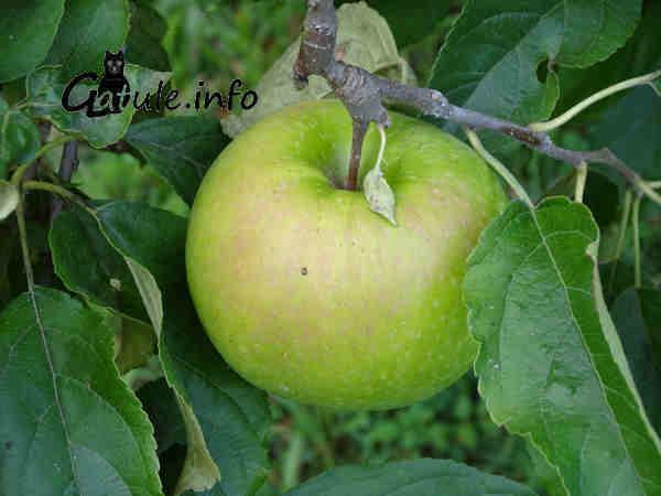 listado árboles frutales