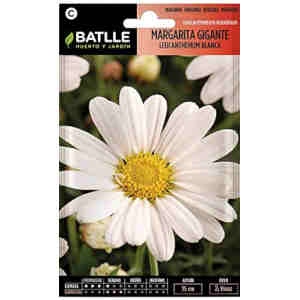 semillas bellis perennis blanca