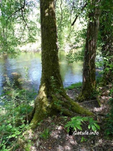 aliso del río