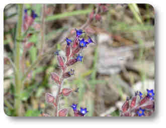 medicinales plantas