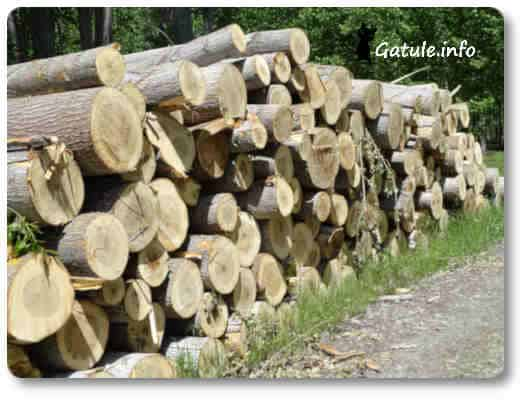 árboles madereros