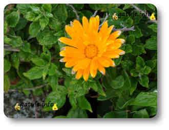 plantas que te ayudan