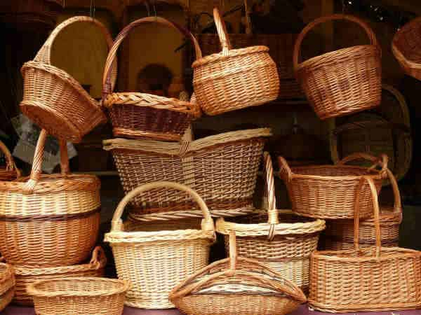 cestas planta mimbre