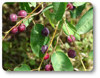 plantas y árboles frutales
