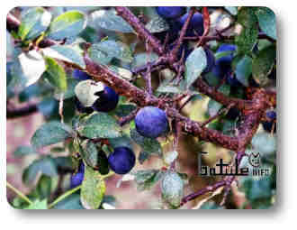árboles o plantas comestibles