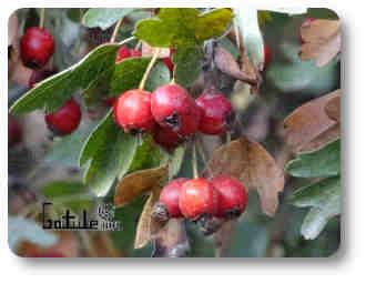 plantas o árboles medicinales