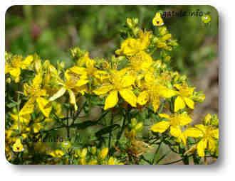arbustos medicinales