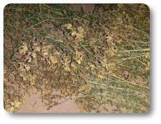 Historia de las plantas y árboles medicinales