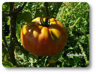 planta comestible