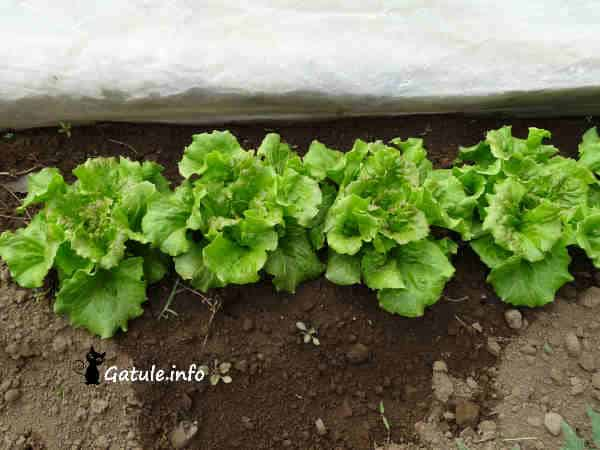 Propiedades cultivo lechuga