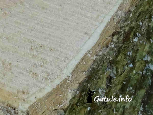 corteza líber y  madera del sabugueiro
