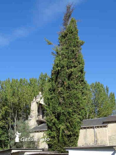 ciprés iglesia