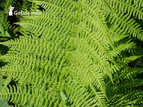 hojas de helecho