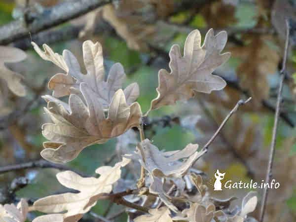 hojas secas roble